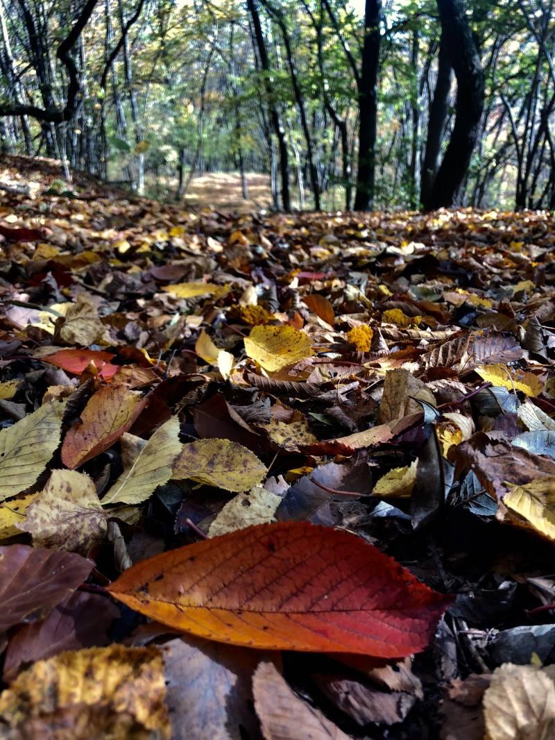 f_landscape4.jpg