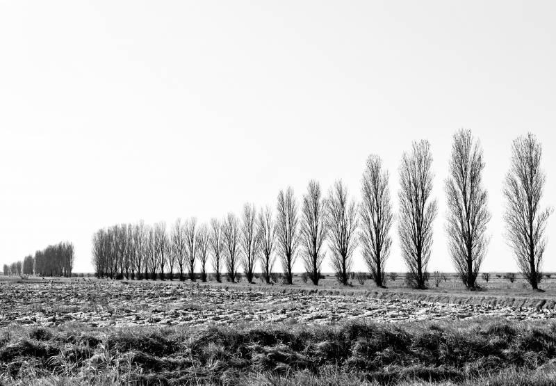 f_landscape5.jpg